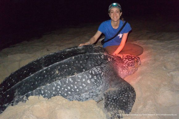 Kayla and her first nesting leatherback turtle. The light near the turtle's head is red from the headlamps of people nearby. People use red light on the beach instead of white light because it does not disturb the turtles while they nest.