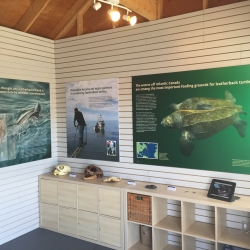 Sea Turtle Centre » Canadian Sea Turtle Network